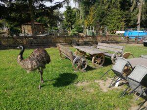 emu i ławki do siedzenia
